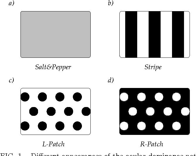 Figure 1 for Ocular dominance patterns in mammalian visual cortex: A wire length minimization approach