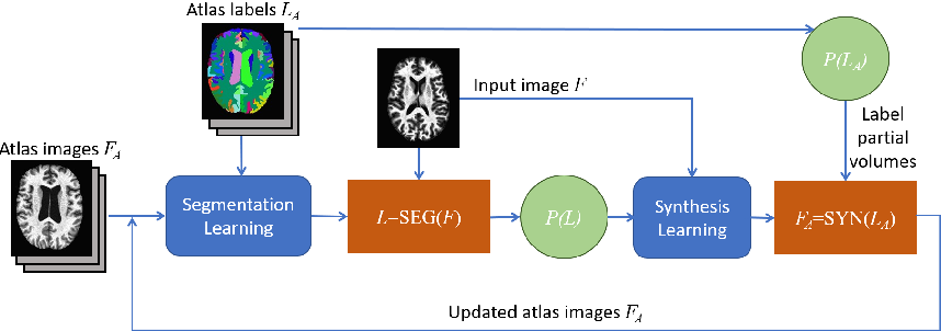 Figure 1 for Contrast Adaptive Tissue Classification by Alternating Segmentation and Synthesis