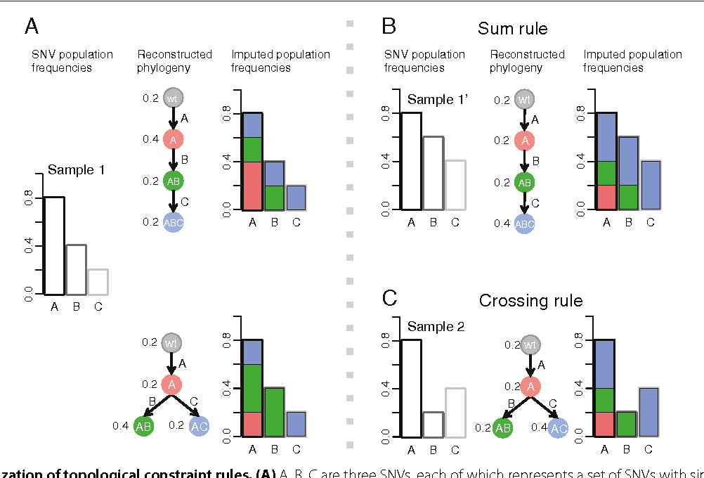 Figure 1 for Inferring clonal evolution of tumors from single nucleotide somatic mutations