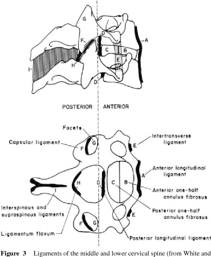The Anatomy And Biomechanics Of Acute And Chronic Whiplash Injury