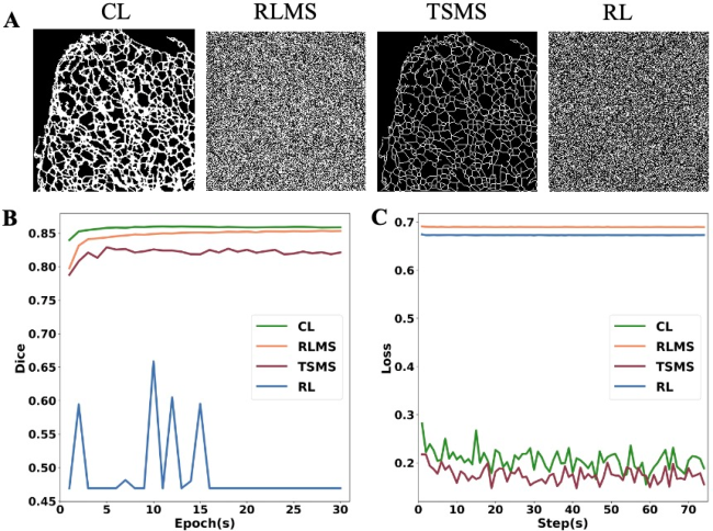 Figure 1 for Deep Neural Networks Learn Meta-Structures to Segment Fluorescence Microscopy Images