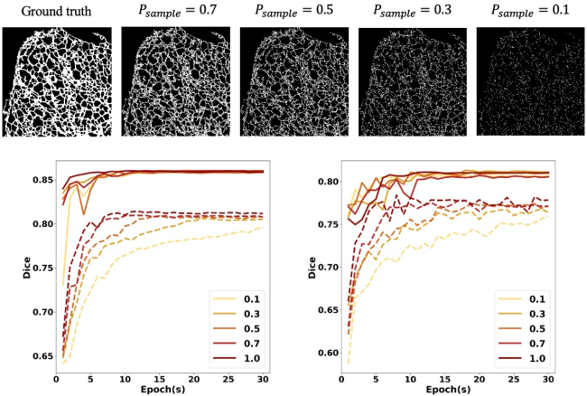 Figure 3 for Deep Neural Networks Learn Meta-Structures to Segment Fluorescence Microscopy Images