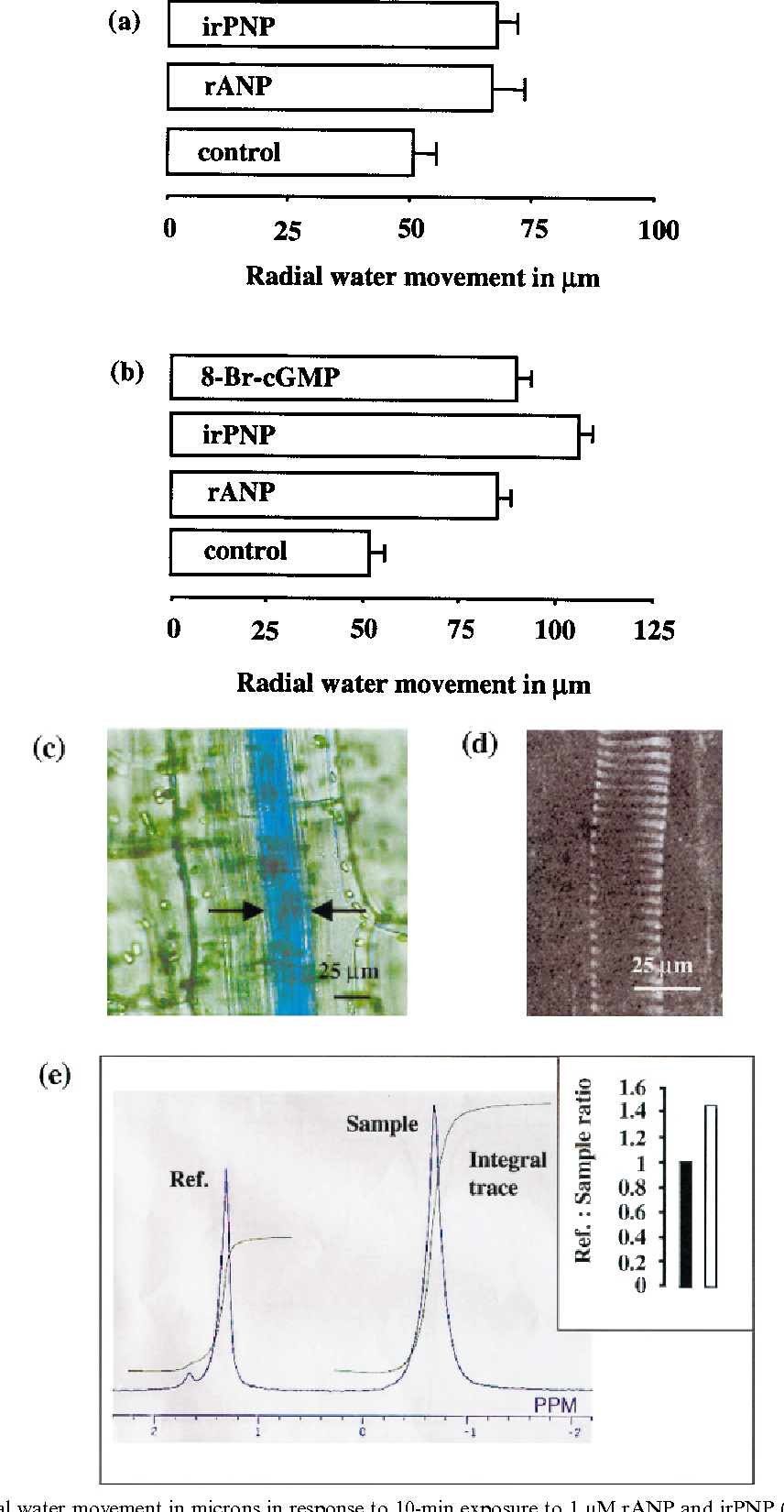 Figure 1. Mean lateral water movement in microns in response to 10-min exposure to 1 mM rANP and irPNP (100 ng total protein/100 mL) (a). In (b) the exposure time was increased from 10 min to 30 min, and a treatment with 100 nM 8-Br-cGMP was included. Each bar represents the mean of ]12 measurements per shoot segment, and the error bars show standard errors (SE). An example of a (0.02% w/v) brilliant blue-carrying cell (c) is optically sectioned with confocal laser scanning microscope (excitation: 488 nm) to reveal typical helical wall thickenings of a xylem cell (d). (e) shows a 2H NMR trace; the left peak represents the signal from the internal standard, and the right peak represents the sample. The inset compares mean ratio between internal reference and controls ( ) with mean ratios between internal reference and 1 mM rANP treatments ( ) (n=9).