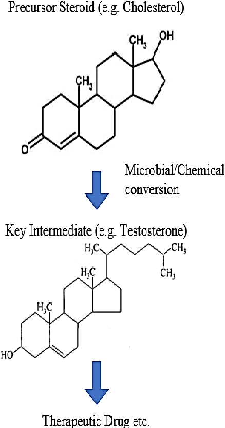 Figure 2 from MICROBIAL TRANSFORMATION OF STEROIDS : A FOCUS ON