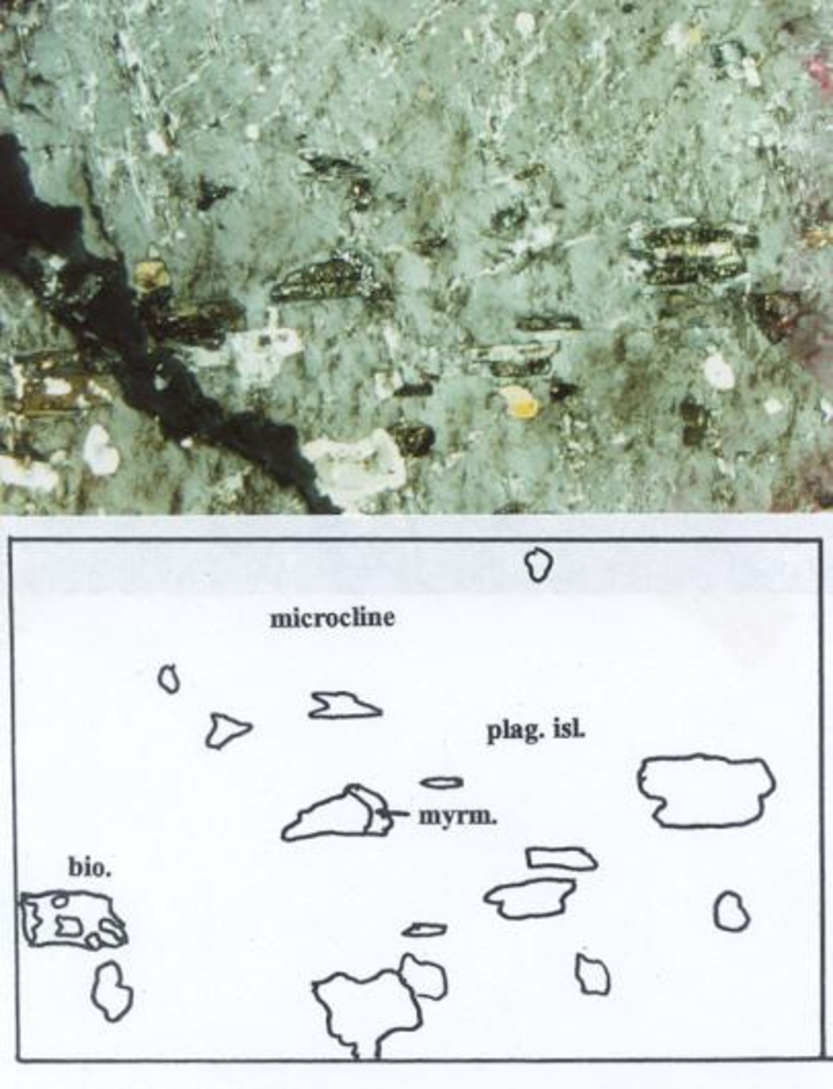 Fig. 10. Portion of perthitic microcline megacryst (light gray) with parallelaligned, albite-twinned, tiny plagioclase inclusions, some of which are bordered by myrmekite with very tiny quartz vermicules (center). Biotite inclusion (left side) is partly replaced by quartz.