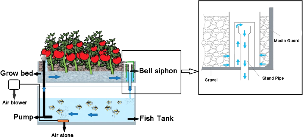 Figure 1 From Biological Nutrient Recovery From Culturing Of Pearl