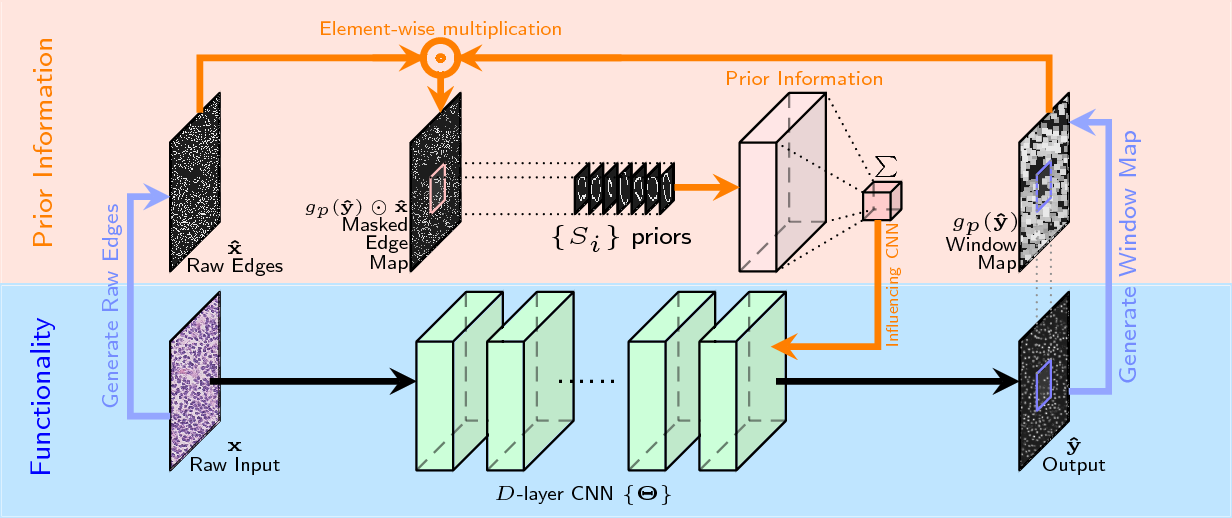 Figure 1 for Deep Networks with Shape Priors for Nucleus Detection