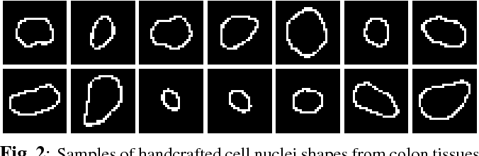 Figure 3 for Deep Networks with Shape Priors for Nucleus Detection