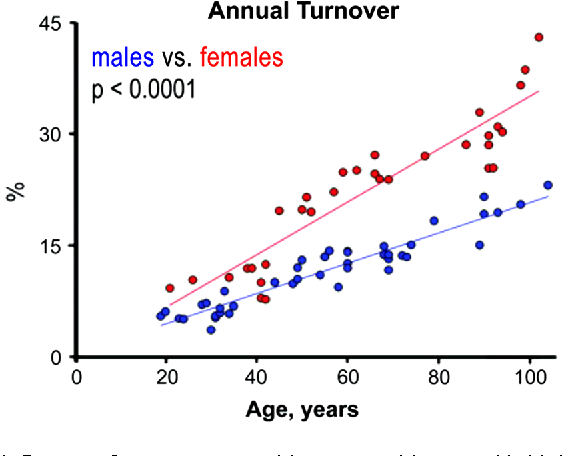 Fig. 1 Degree of myocyte renewal increases with age and is higher in female than in male myocardium [2]