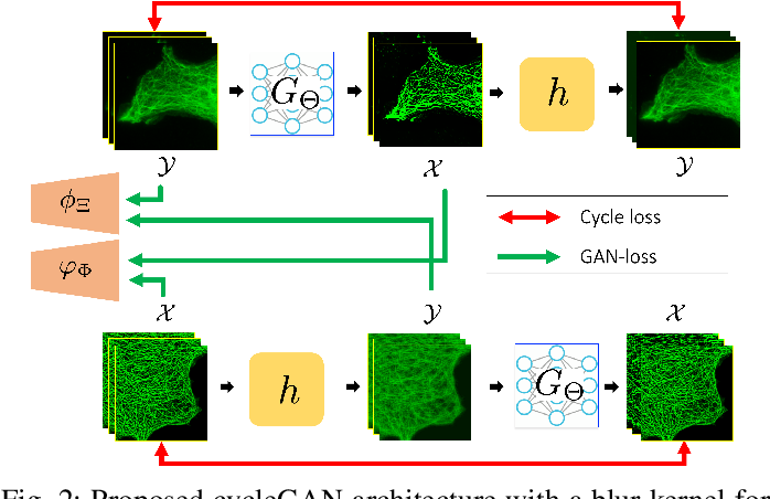 Figure 2 for CycleGAN with a Blur Kernel for Deconvolution Microscopy: Optimal Transport Geometry