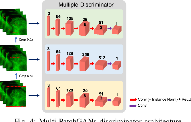 Figure 4 for CycleGAN with a Blur Kernel for Deconvolution Microscopy: Optimal Transport Geometry