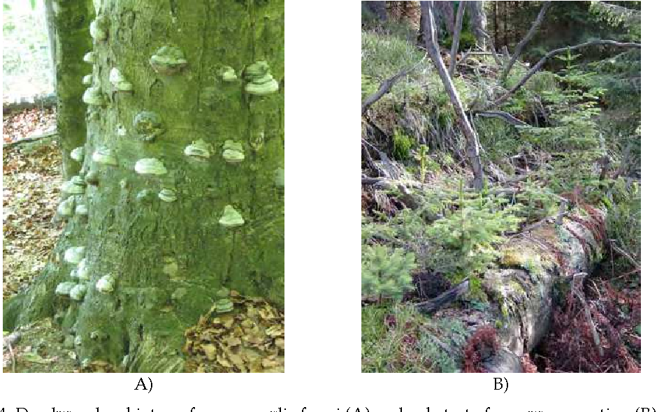 Figure 4 From Deadwood In Forest Ecosystems 83 2 Definition And
