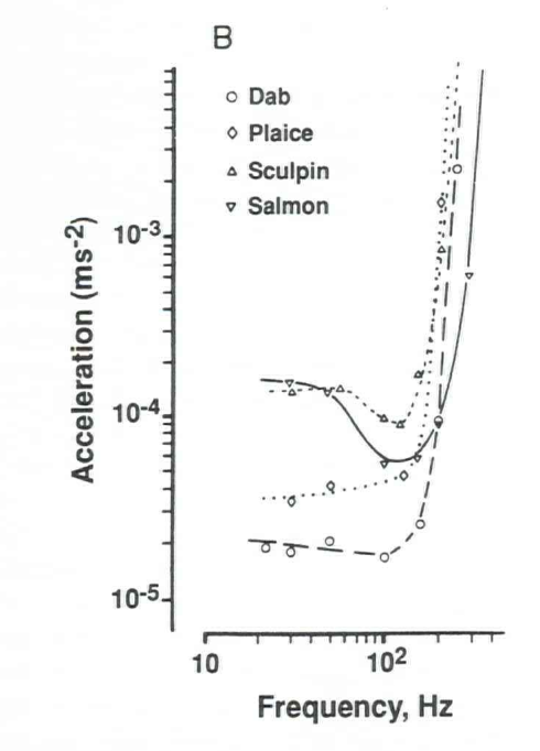 PDF] Detection and reaction of fish to infrasound - Semantic