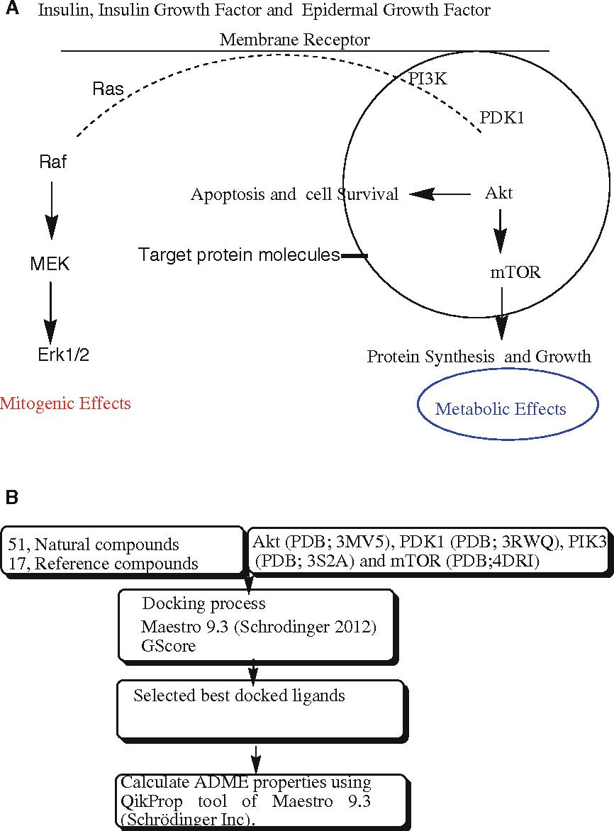 Multitargeted molecular docking study of plant-derived