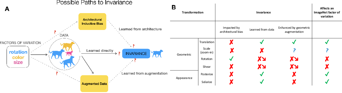 Figure 1 for Grounding inductive biases in natural images:invariance stems from variations in data