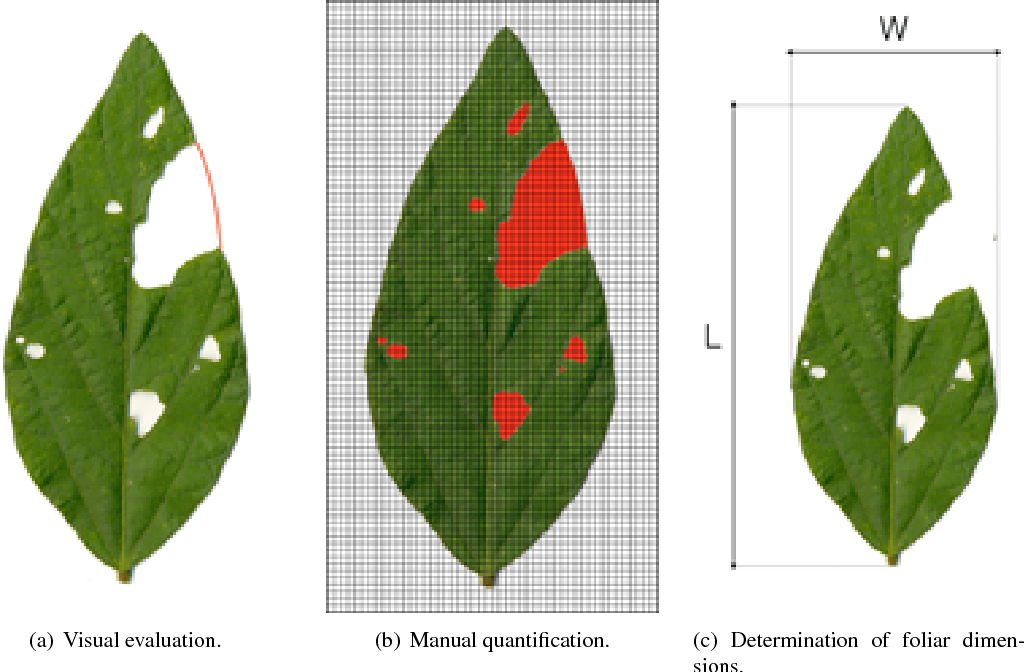 Figure 1 for BioLeaf: a professional mobile application to measure foliar damage caused by insect herbivory