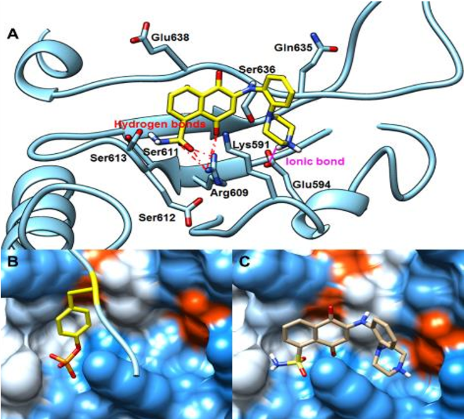 Figure 8. (A) Interactions between 9 and key residues of STAT3 protein. (B) Interactions between the native peptide and the pY705 site. (C) The docking modes of 9 to the same binding sites as the native peptide.