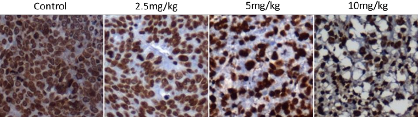 Figure 16. The IHC analysis of p-STAT3 in tumor tissues treated with 9.