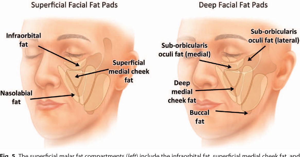 clinical anatomy mark hankin pdf