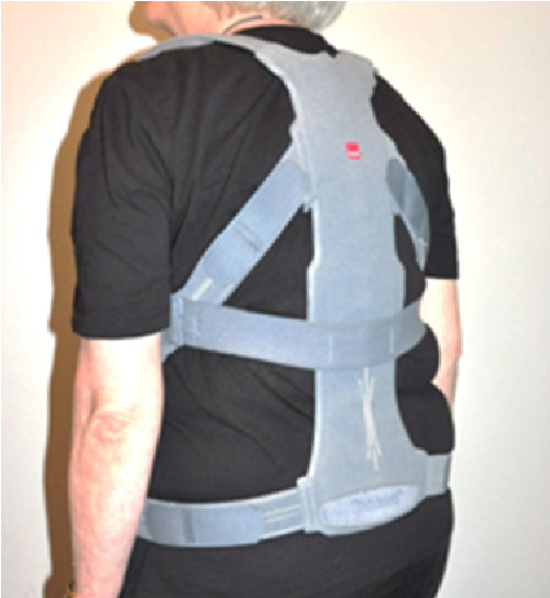 Wearing an active spinal orthosis improves back extensor