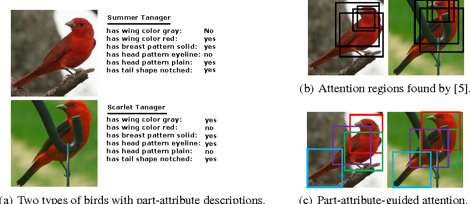 Figure 1 for Localizing by Describing: Attribute-Guided Attention Localization for Fine-Grained Recognition