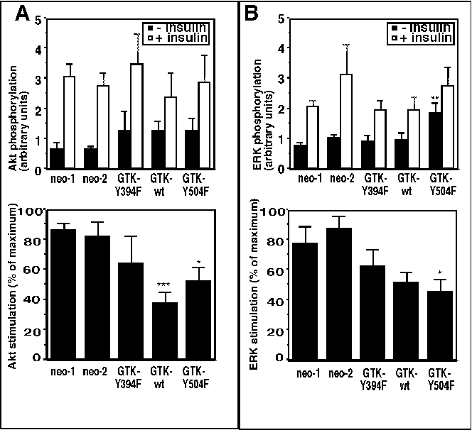Figure 5 from GTK tyrosine kinase-induced alteration of IRS-protein