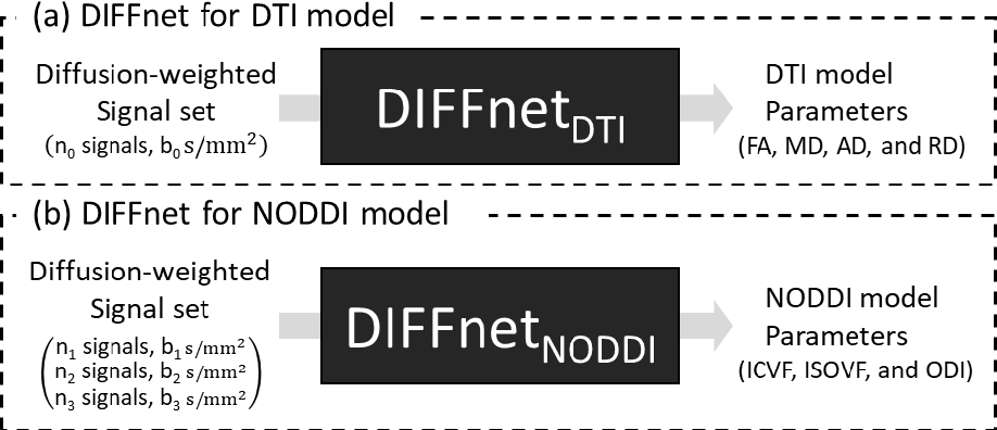 Figure 1 for DIFFnet: Diffusion parameter mapping network generalized for input diffusion gradient schemes and bvalues