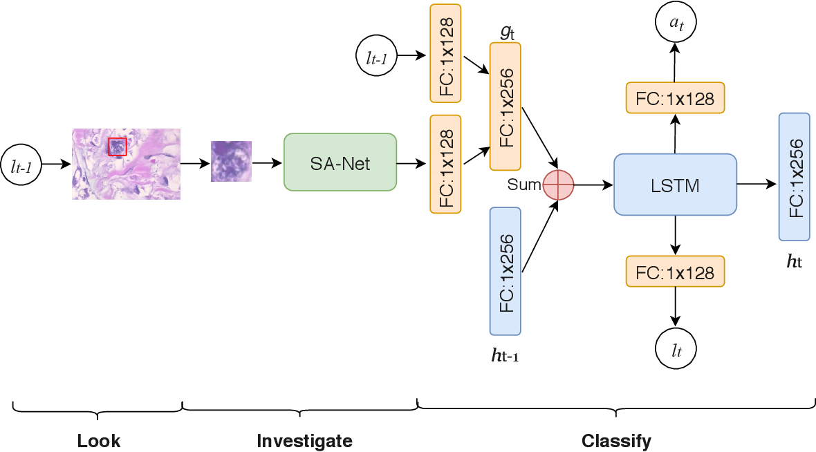 Figure 1 for Look, Investigate, and Classify: A Deep Hybrid Attention Method for Breast Cancer Classification