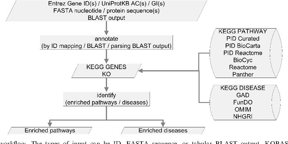Kegg Genes