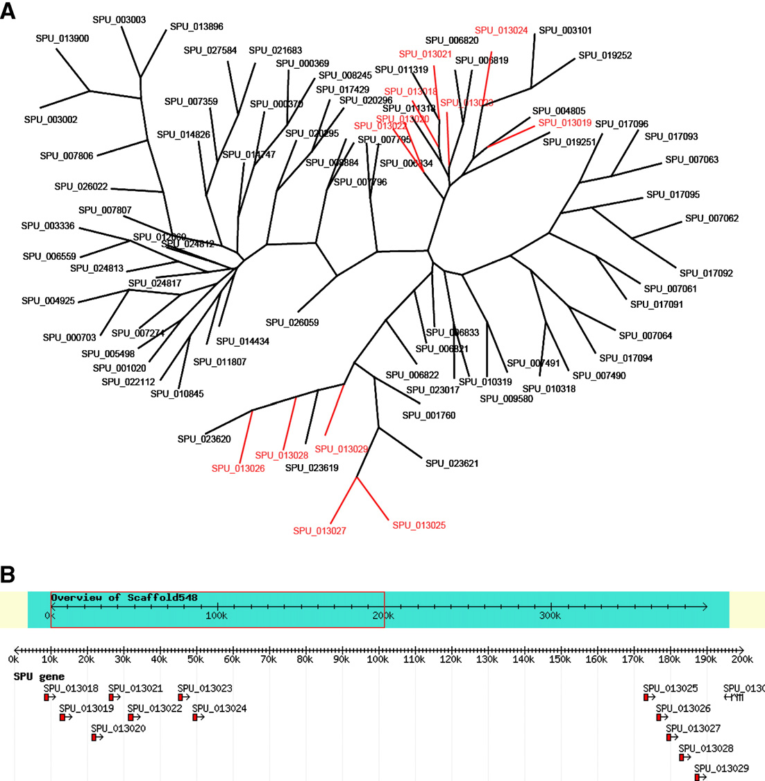 Figure 11 from a genomic view of the sea urchin nervous system putative sea urchin chemosensory genes form clusters in genome a pooptronica Image collections