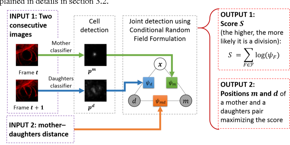 Figure 3 for Mitosis Detection in Intestinal Crypt Images with Hough Forest and Conditional Random Fields