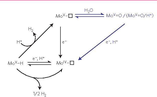 Figure 5 | Proposed catalytic pathway for H2 evolution. (Equations (4) and (6) are not included in this scheme but contribute to the formation of the unsaturated MoIV sites.)