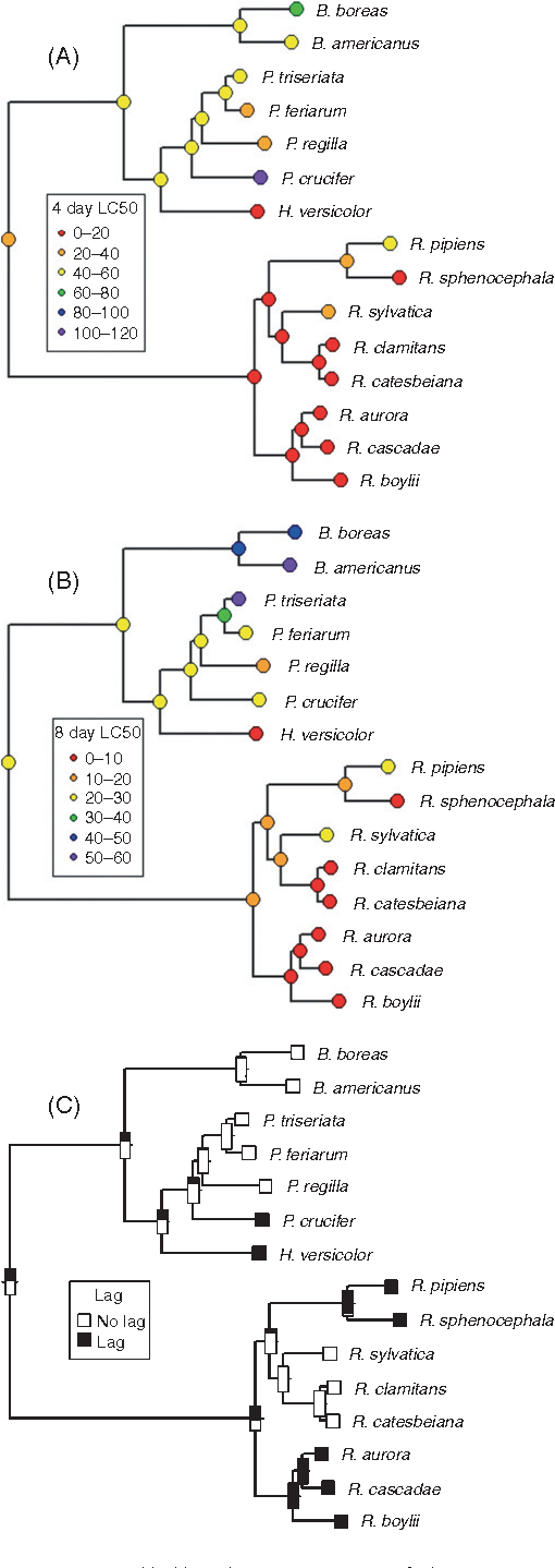 Phylogeny meets ecotoxicology: evolutionary patterns of