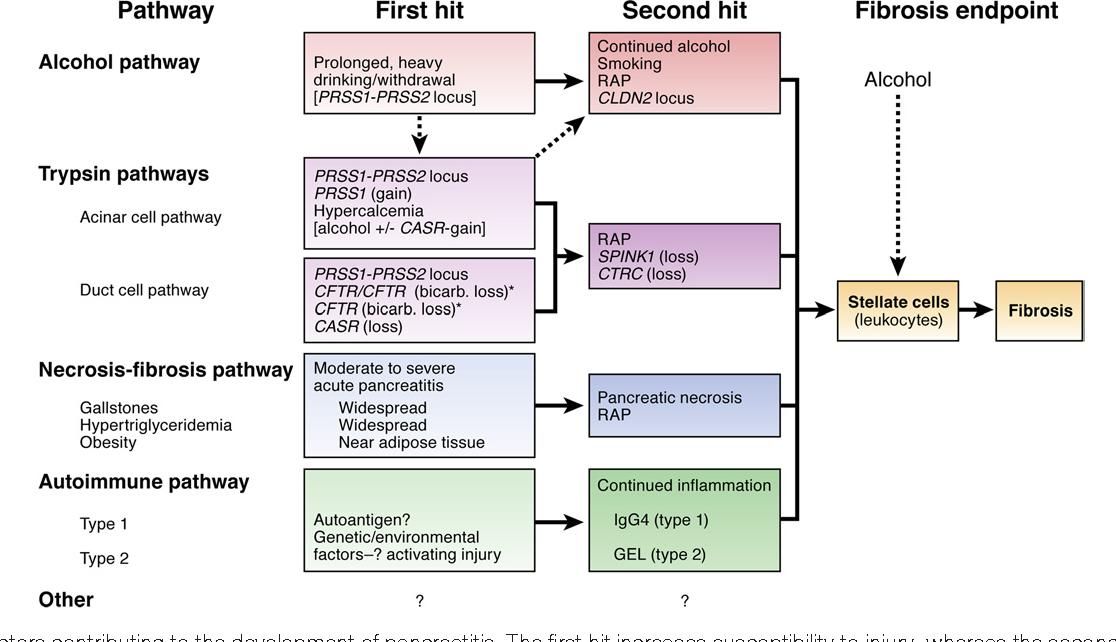New Genetic Risk Factor For Developing >> Figure 4 From Genetic Risk Factors For Pancreatic Disorders