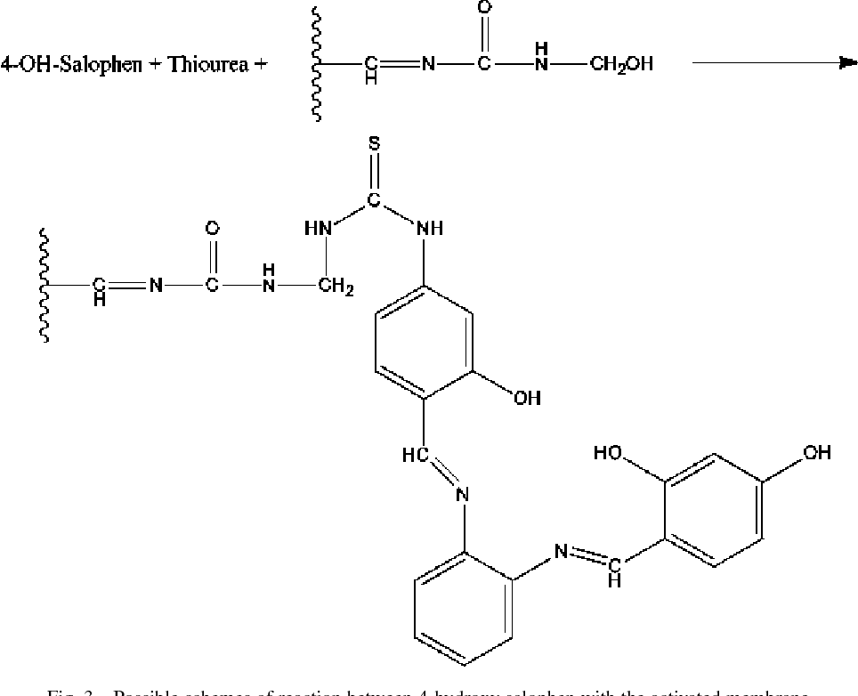 Fig. 3. Possible schemes of reaction between 4-hydroxy salophen with the activated membrane.