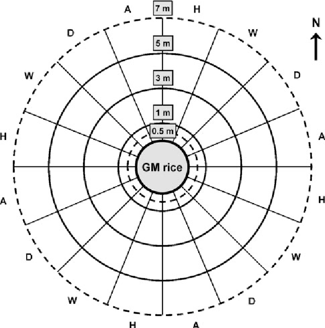 Gene Flow From Herbicide Tolerant Gm Rice And The Heterosis Of Gm
