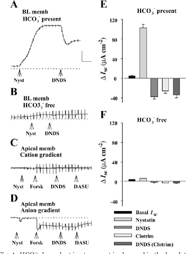 Figure 4 From Functional And Molecular Evidence For Na Hco