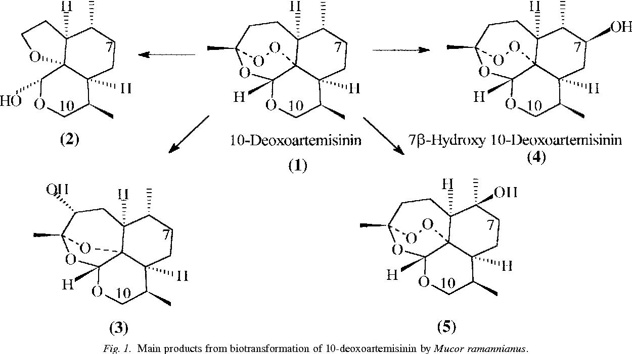 Biotransformation of 10 deoxoartemisinin to its 7 hydroxy figure 1 ccuart Gallery