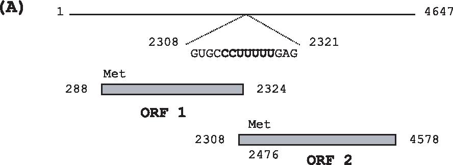 Figure 2 from Double-stranded RNA virus in Korean isolate IH-2 of