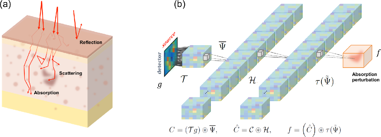 Figure 1 for Deep Learning Can Reverse Photon Migration for Diffuse Optical Tomography
