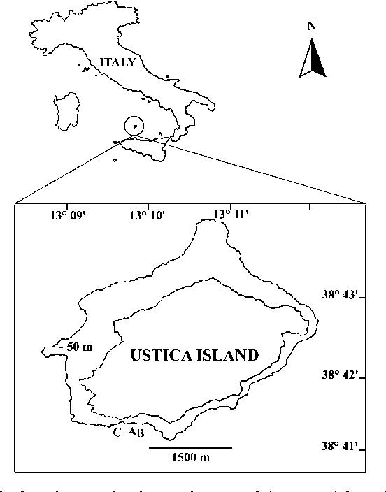 Figure 1 From Description Of Chone Usticensis Sp Nov Polychaeta