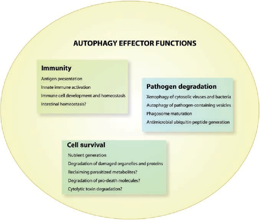 Eating the enemy within: autophagy in infectious diseases - Semantic