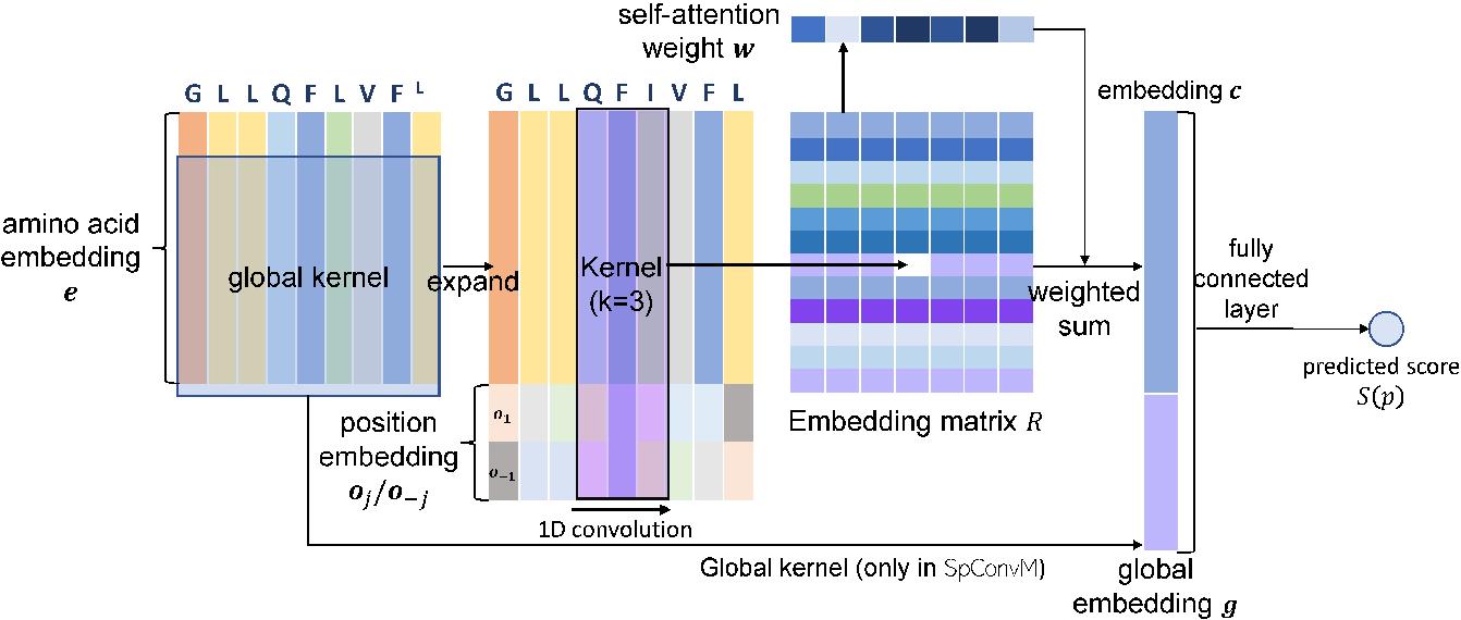 Figure 2 for Ranking-based Convolutional Neural Network Models for Peptide-MHC Binding Prediction