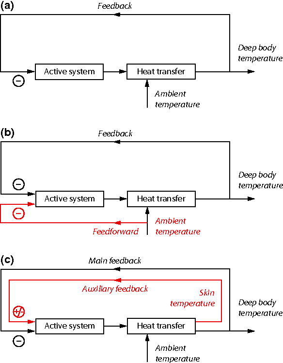 Skin temperature its role in thermoregulation semantic scholar figure 1 ccuart Choice Image