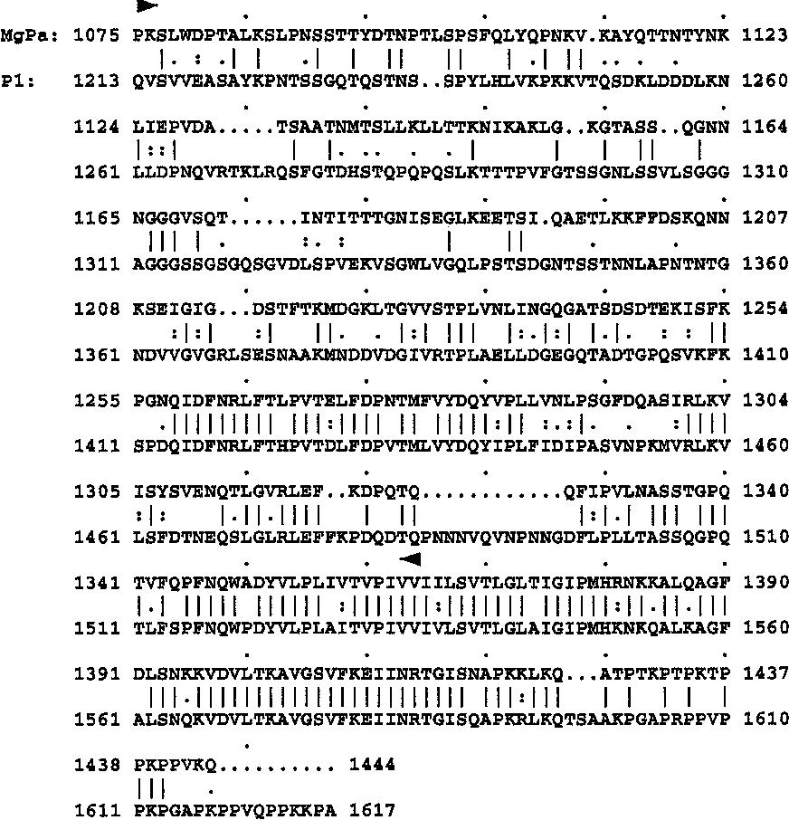 Figure 1 from Serological investigation of Mycoplasma genitalium in ...