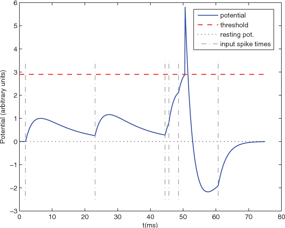 Figure 3. Leaky Integrate-and-Fire (LIF) neuron. Here is an illustrative example with only 6 input spikes. The graph plots the membrane potential as a function of time, and clearly demonstrates the effects of the 6 corresponding Excitatory PostSynaptic Potentials (EPSP). Because of the leak, for the threshold to be reached the input spikes need to be nearly synchronous. The LIF neuron is thus acting as a coincidence detector. When the threshold is reached, a postsynaptic spike is fired. This is followed by a refractory period of 1 ms and a negative spike-afterpotential. doi:10.1371/journal.pone.0001377.g003