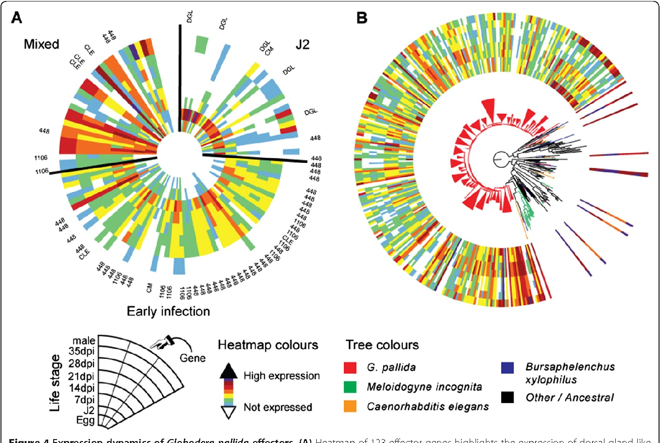 The genome and life stage specific transcriptomes of globodera figure 4 pooptronica Gallery