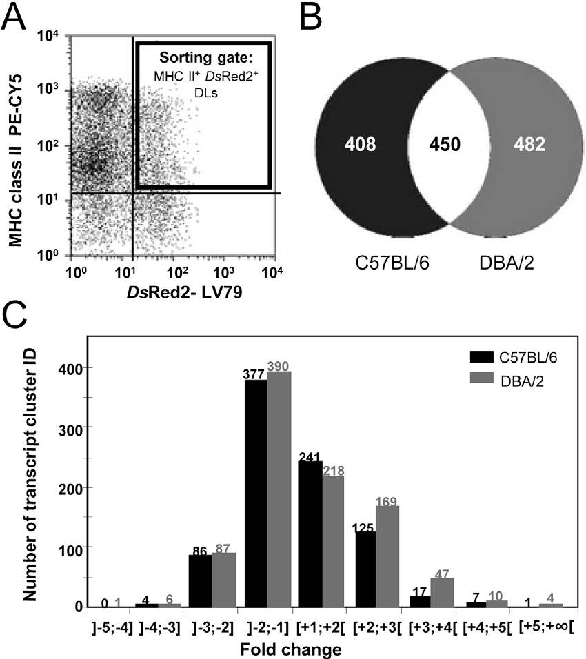 Figure 3. Transcriptional analysis of DLs hosting LV79 amastigotes. C57BL/6 and DBA/2 BMD-DL cultures were incubated or not with DsRed2-LV79 amastigotes (MOI of 5:1) for 24 hours. A) Gating strategy for sorting the DLs that were hosting live amastigotes. The double labelling of i) surface MHC class II molecules-detected by an antibody conjugated to PE-CY5- and ii) intracellular transgenic LV79 expressing the fluorescent DsRed2 allowed the sorting of DLs hosting live amastigotes (black gate). B, C) Global analysis of modulated transcripts in C57BL/6 and DBA/2 DLs hosting live LV79 amastigotes. Once control DLs and amastigote-hosting DLs were sorted their respective total RNA were prepared and further processed for Affymetrix-based analyses. (B) Representation of the number of specific and common transcripts modulated in live amastigoteshosting DLs sorted from C57BL/6 and DBA/2 bone marrow cultures. (C) Histogram showing the number of modulated transcripts according to their fold change values. doi:10.1371/journal.pntd.0001980.g003