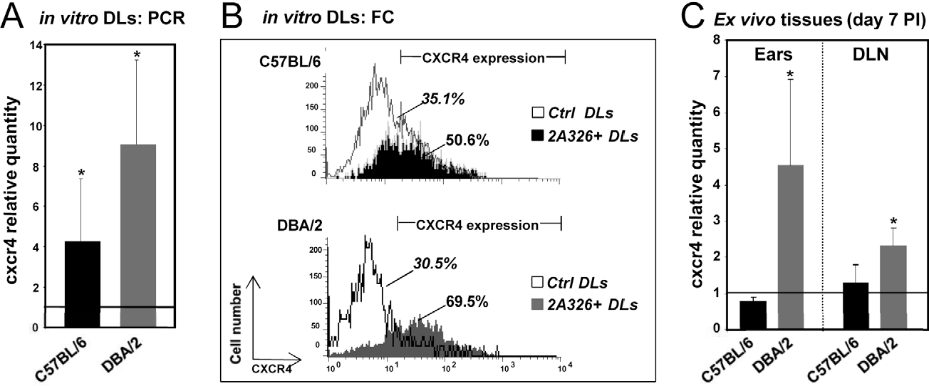 Figure 5. Validation of microarray analyses. A) RT-qPCR analysis of cxcr4 transcript modulation in sorted BMD-DLs hosting live L. amazonensis amastigotes, the BMD-DLs unexposed to amastigotes being the calibrators for each mouse genotype. Means and standard deviations are shown (n = 3 independent experiments). Significant p values are indicated *p,0.05. B) FCM analysis of CXCR4 expression. Intracellular amastigotes were evidenced by the intracellular immunostaining with 2A3-26 mAbs conjugated to Alexa Fluor (green fluorescence) and CXCR4 expression by PEconjugated anti-CXCR4 antibodies. CXCR4 expression was analyzed in unexposed DLs to Leishmania (Ctrl DLs; white histograms) and in 2A3-26+ DLs from DL cultures exposed to Leishmania amastigotes (black and grey histograms represent DLs from C57BL/6 and DBA/2 mouse genotypes, respectively). One representative experiment of 4 independent experiments is shown. C) RT-qPCR analysis of cxcr4 abundance in ears and ear-DLNs of L. amazonensis-hosting C57BL/6 and DBA/2 mice. Three mice of each species were inoculated with 104 L. amazonensis/LV79 metacyclic promastigotes into the ear dermis. For control, three mock mice were used as calibrator for calculating relative expressions. At day 7 PI, ears and DLNs RNA were extracted and reverse transcribed and the real time PCR assay was performed as described in Methods. Displayed data are the mean fold changes for cxcr4 transcripts. Significant values between control and L. amazonensis-hosting mice are indicated *p,0.05. One representative experiment of 3 independent experiments is shown. doi:10.1371/journal.pntd.0001980.g005