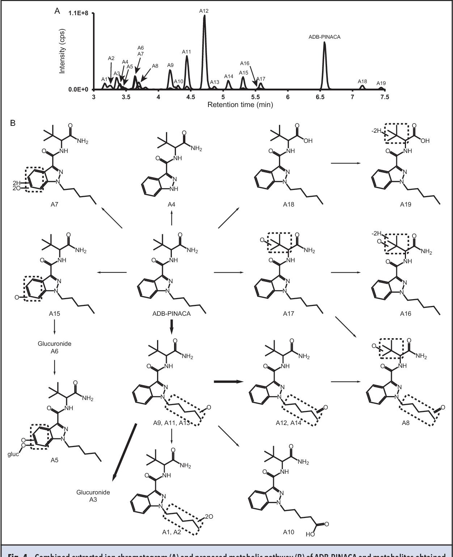 Distinguishing Intake of New Synthetic Cannabinoids ADB-PINACA and